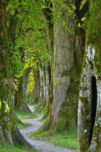 trees-2897757_1280